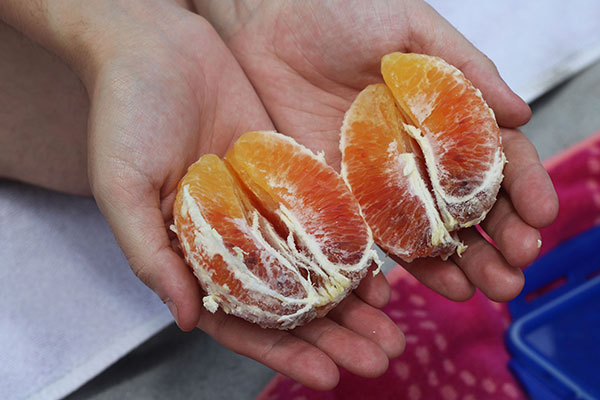 Close-up photograph of a person's open hands cradling two halves of a fresh, peeled orange.